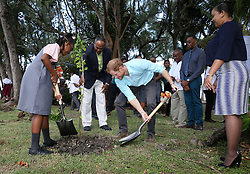 Prince Harry helps plant a tree as he attends a conversation projects exhibition, where he will unveil a plaque designating the Castries Water Works Reserve and surrounding rainforest as St Lucia's contribution to The Queen's Commonwealth Canopy Project, on the island of St Lucia during the second leg of his Caribbean tour.