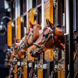 Dalham Stud Darley Stallion Parade 13/07/2018