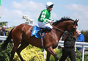 Jockey Shane Kelly riding Quality Song in the Parade Ring before the 2.20 race at Brighton Racecourse, Brighton & Hove, United Kingdom on 10 June 2015. Photo by Bennett Dean.
