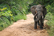 An elephant grooms itself in the sand of a river bed. Hluhluwe-Imfolozi Game Reserve, KwaZulu-Natal province of South Africa.