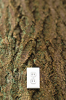 Electrical outlet on the side of a tree, close-up.
