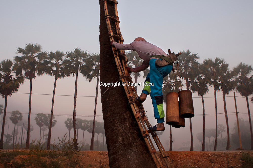 Ko Aung Myo beginning to climb a palm tree at the farm. At Ka Myaw Gyi village in the outskirts of Dawei, Myanmar.