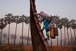 Ko Aung Myo beginning to climb a palm tree at the farm. At Ka Myaw Gyi village in the outskirts of Dawei, Myanmar.