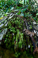 This fallen tree has become the host for a variety of other plant species to thrive on.