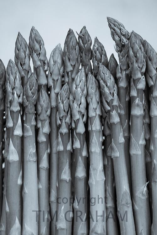 FINE ART PHOTOGRAPHY by Tim Graham<br /> FOOD - Fresh Asparagus