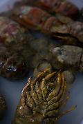 Belo Horizonte_MG, Brasil...Festival Gastronomico Sabor e Saber, na foto detalhe de lagostim...The Gastronomic Festival Sabor e Saber, in this photo some foie gras...Foto: BRUNO MAGALHAES / NITRO