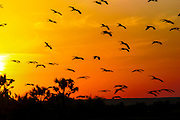 Africa, Kenya, lake Turkana birds at sunset in October