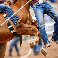 A mugger is lifted from the rodeo floor as a horse rears in the during the Navajo Nation Fair rodeo Wild Horse Race at the Navajo Nation Fairgrounds in Window Rock Saturday.