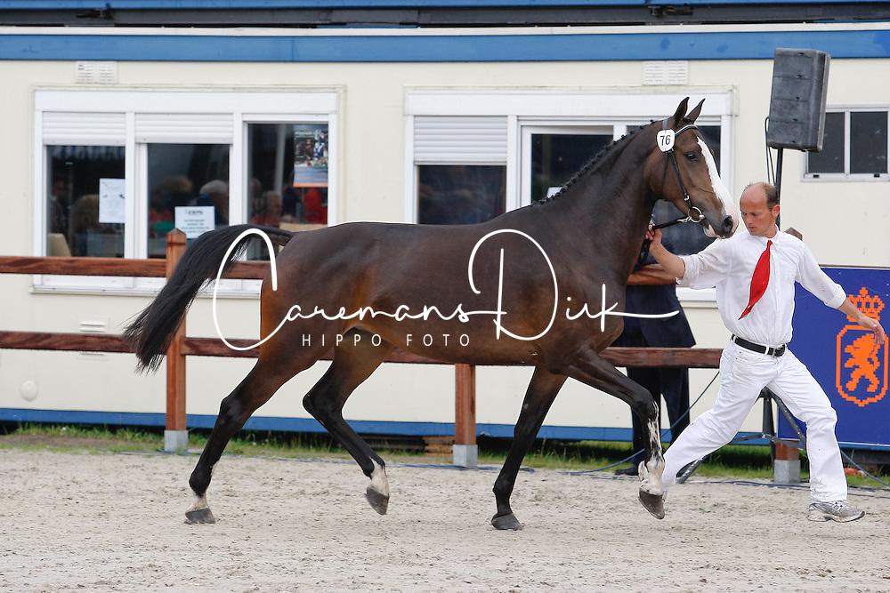 76 - Denolia<br /> KWPN Paardendagen 2011 - Ermelo 2011<br /> © Hippo Foto - Leanjo de Koster