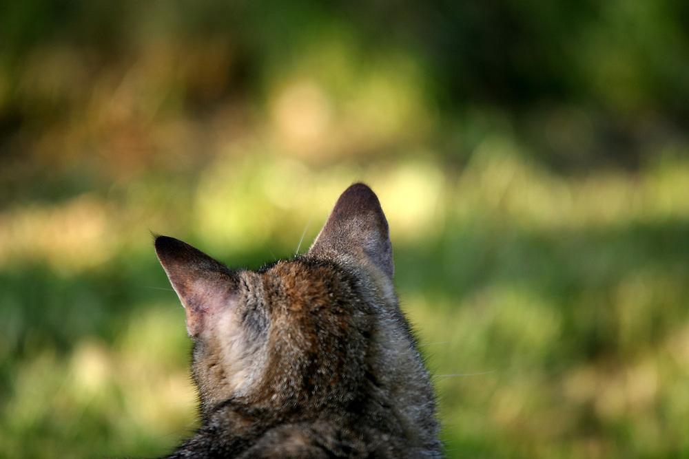 Stra&szlig;en- und Hauskatze Speedy auf einer Decke im Garten.<br /> <br /> Street- and housecat Speedy in the garden.