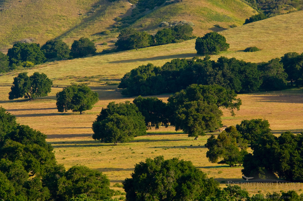 Oak trees and rolling green hills in Spring in rugged rangelands at the base of the Santa Ynez Mountains, California