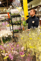 © Licensed to London News Pictures. 15/03/2012. London, UK. Dean Knight sort out Orchids in preparation for the rush. The Mothering Sunday sales rush is on for flower growers, suppliers, florists and retailers amongst the Flowers at the New Covent Garden Flower Market on March 15th 2012 in London, England. New Covent Garden Flower Market is London's premier wholesale market stocking the widest range of flowers, plants and foliage in the UK. The run up to Mothers' Day is crucial in the flower selling calendar as Mothers' Day sales are condensed into about four days making the market very busy. Traditionally, Mothering Sunday was a day when children, mainly daughters, who had gone to work as domestic servants, were given a day off to visit their mother and family. Today, Mother's Day is a time when children give flowers and cards to their mothers, and generally pamper them..  Photo credit : Stephen SImpson/LNP