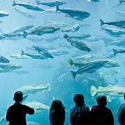 Three weeks aboard the Kong Harald. Hurtigruten, the Coastal Express. The Atlantic Sea Park (Atlanterhavensparken) at Tueneset, the biggest salt water aquarium in northern Europe.