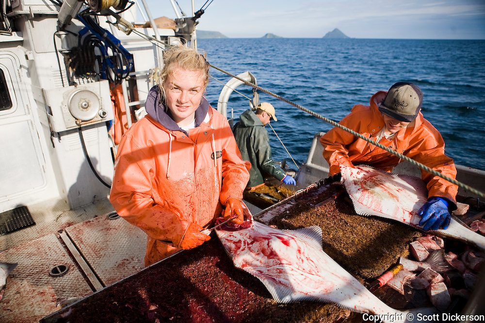 Emma Teal Laukitis and Keith Bell gutting halibut while commercial longline fishing for pacific halibut in the Aleutian Islands, Alaska.