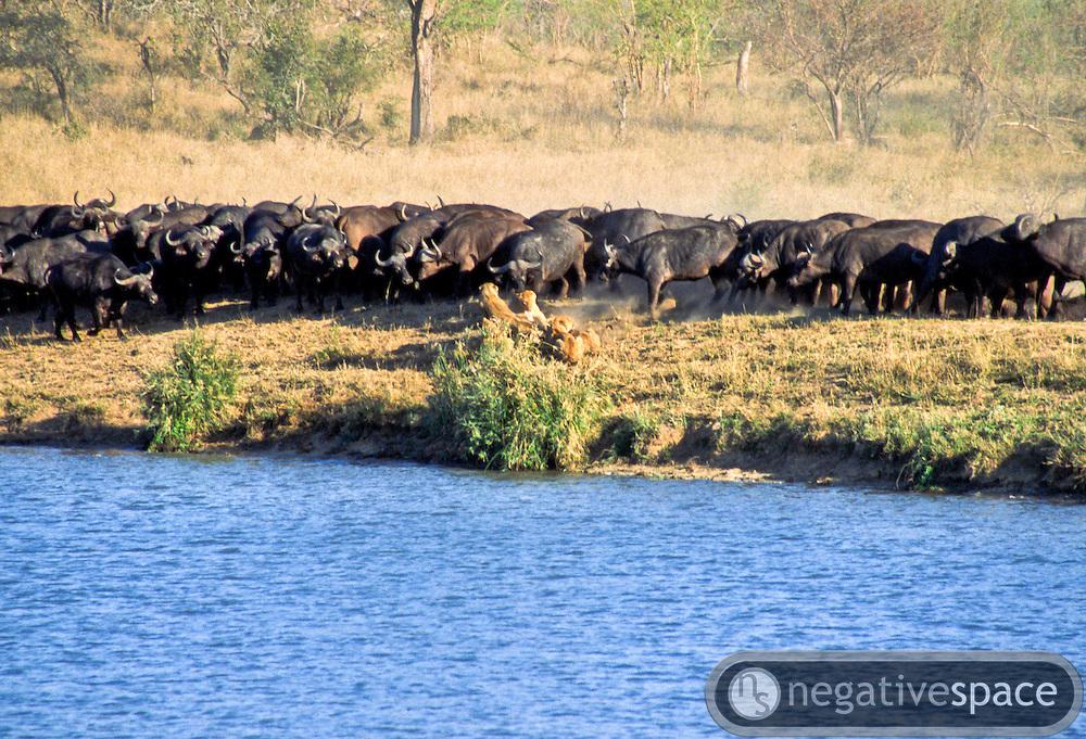 Battle at Kruger No. 18