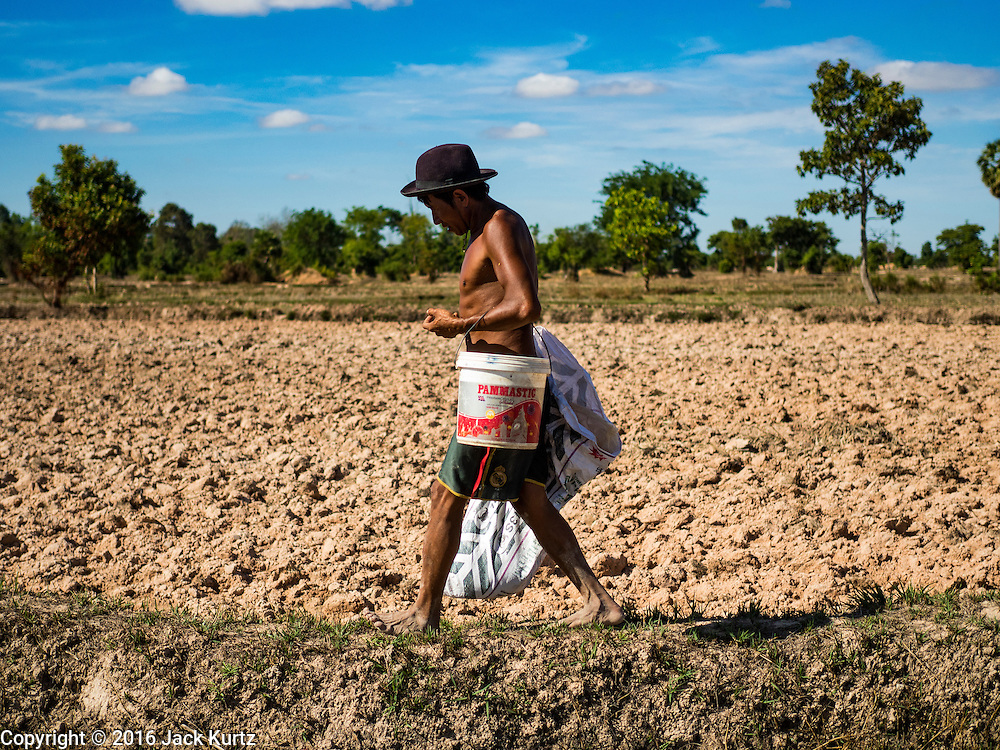 02 JUNE 2016 - SIEM REAP, CAMBODIA:  LERN, who has been farming all his life, plants rice in his fields near Seam Reap. Cambodia is in the second year of  a record shattering drought, brought on by climate change and the El Niño weather pattern. Lern said this is driest he has ever seen his fields. He said he is planting because he has no choice but if they rainy season doesn't come, or if it's like last year's very short rainy season he will lose his crops.   PHOTO BY JACK KURTZ