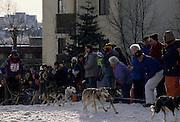 Dog musher, Dogs, Sled Dogs, Dog sled, Dog Sledding, mushing, Anchorage, Alaska