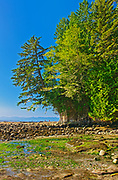 Botanical Beach at low tide (Formerly Botanical Beach  Provincial Park), Juan de Fuca Provincial Park, British Columbia, Canada