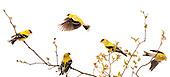 New Age Audubon