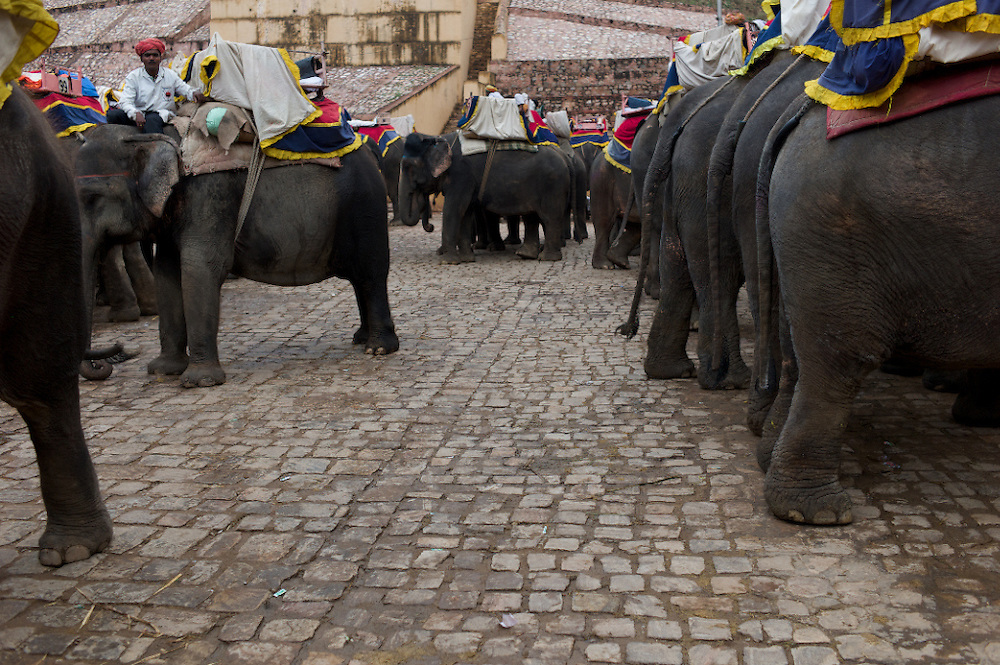 India-Jaipur Elephants