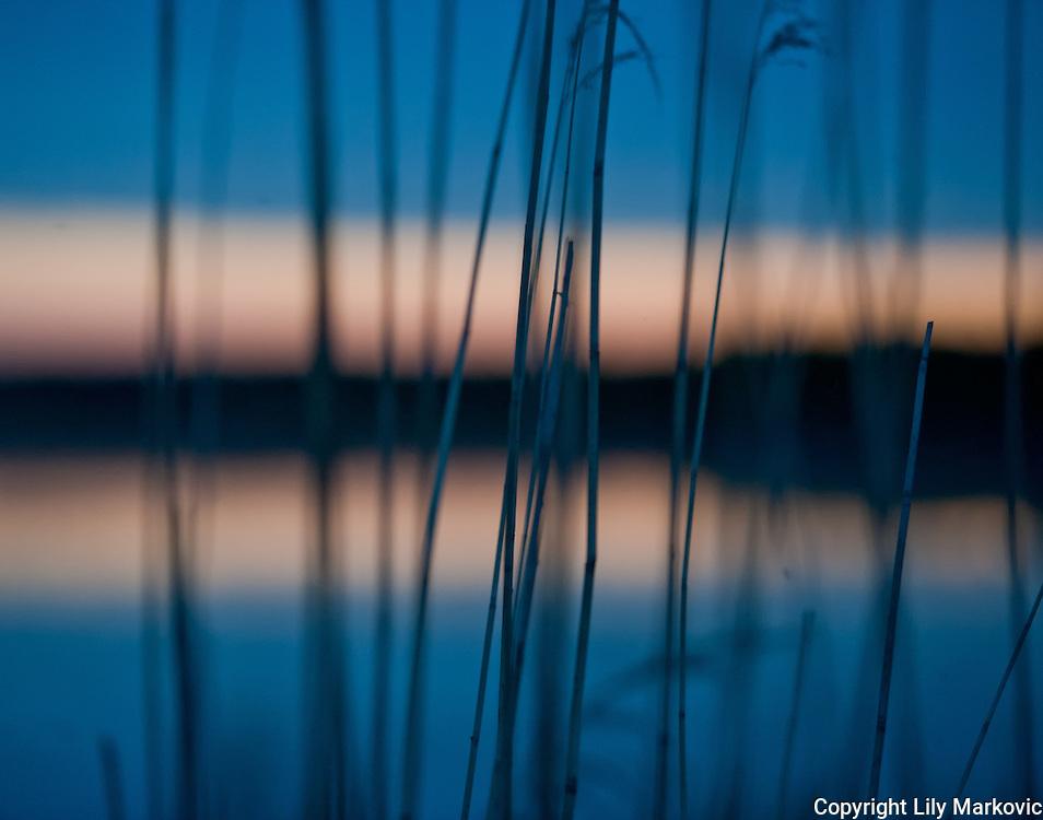 Lake trough the Grass