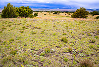 Short grass prairie of northeastern New Mexico.  Near Capulin Volcano  National Monument.