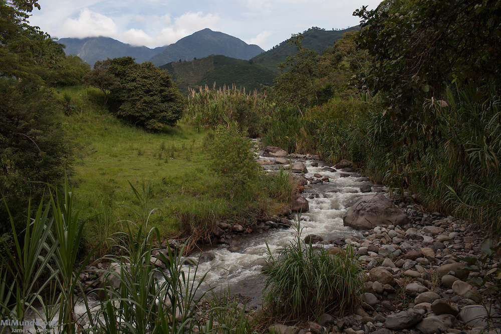 A stream running down from the Farallones de Citará protected páramo region. These Andean peaks ranging between 3,000 and 4,000 meters high comprise a fundamental water source and include one of the most important páramo ecosystems in Colombia. The páramo ecosystem is a neotropical biome located above the continuous forest line, yet below the permanent snow-line consisting of mainly of shrubs and grasses. Corregimiento Farallones, Ciudad Bolivar, Antioquia, Colombia. September 26, 2013.