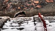 Duck sleeping in winter  on the Aare
