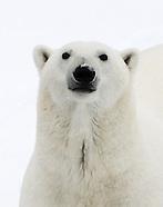 Top_Svalbard