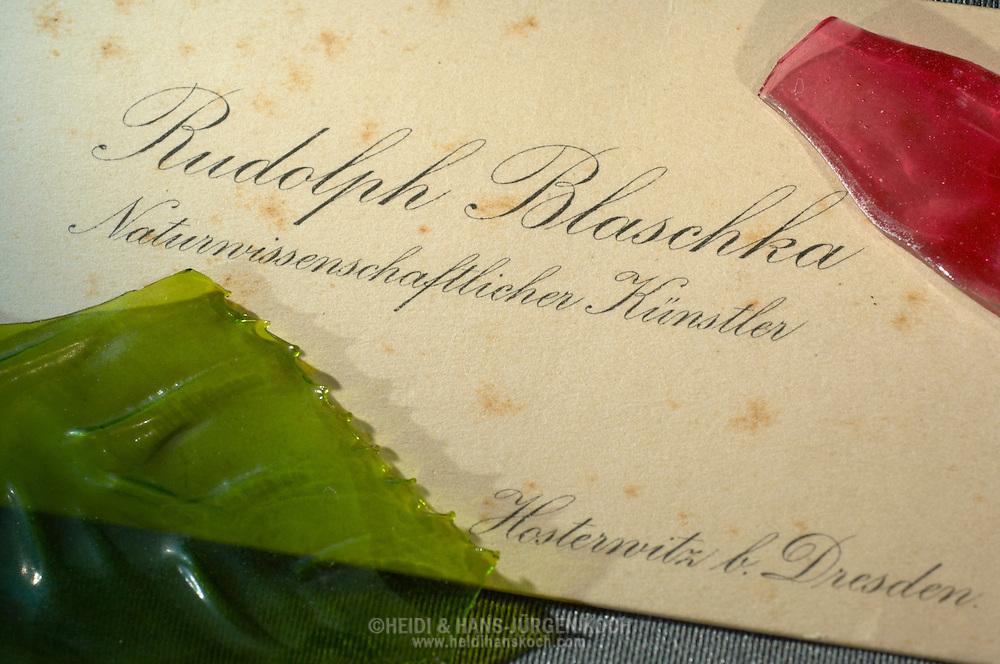 DEU, Deutschland: Original Visitenkarte von Rudolf Blaschka mit Stockflecken, darauf zwei der wenigen übrig gebliebenen Glasscherben die noch in der alten Blaschka-Werkstatt gefunden wurden, dieses Glasmodell stammt aus dem Werk der naturwissenschaftlichen Glaskünstler Leopold Blaschka (1822-1895) und Sohn Rudolf Blaschka (1857-1939). Zwischen 1863 und 1890 entstanden in der Dresdner Werkstatt Tausende Glasmodelle wirbelloser Meerestiere, die ihren Weg in Museen und Universitäten der ganzen Welt fanden. Diese Nachbildungen verblüffen bis heute, denn sie sind morphologisch fehlerfrei und halten naturwissenschaftlichen Betrachtungen bis ins Detail stand - die perfekte Verschmelzung von Kunst und Naturwissenschaft. Die Blaschkas hatten keine Lehrlinge und es gibt keine weiteren Nachfahren. Vater und Sohn haben das Geheimnis ihrer einzigartigen Technik mit ins Grab genommen, Blaschka Haus, Dresden, Sachsen | DEU, Germany: An original visiting card of Rudolf Blaschka with mould stains, two of the few remaining cullet, founded in the former Blaschka-Workshop, this glass model originated from the work of the scientific glass artists Leopold Blaschka (1822-1895) and his son Rudolf Blaschka (1857-1939). Between 1863 and 1890 thousands of glass models of invertebrates sea animals developed in the workshop in Dresden, which found their way in museums and universities of the whole world. These reproductions amaze until today, because they are morphologically exact and withstand scientific examinations in detail - the perfect fusion of art and natural science. The Blaschkas didn?t have apprentices and it gives no further descendants. Father and son took the secret of their inimitable technology also in the grave, Blaschka house, Dresden, Saxonia |