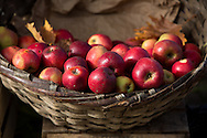 Autumn is not only anchovy season, but apple season too along the Black Sea coast.