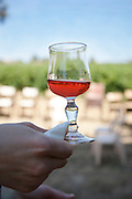 wine tasting hand holding a glass