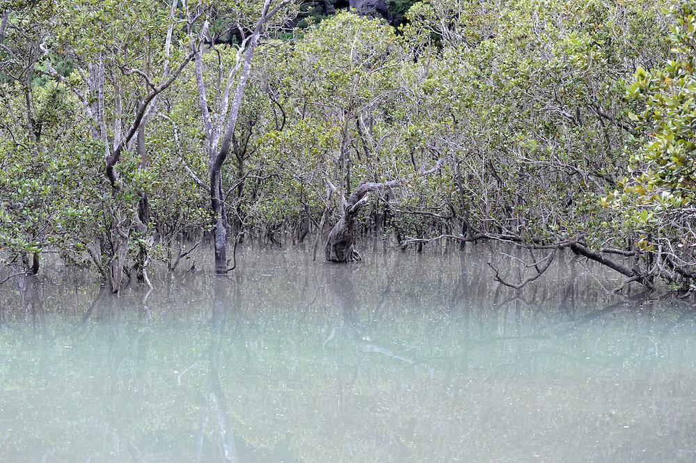 Mangrove swamps, waterfront, Opua, New Zealand, Monday, February 06, 2012. Credit:SNPA / Ross Setford