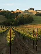 Wine - California
