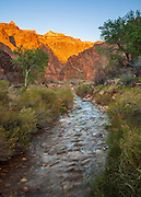 Bright Angel Creek just past Phantom Ranch. In the distance is the 'Black Bridge' one of two foot bridges which cross the Colorado River. Grand Canyon National Park.