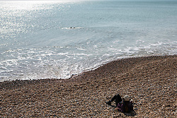 A person sunbathes on the beach as a swimmer passes by in Brighton, East Sussex, as the UK continues in lockdown to help curb the spread of Coronavirus.