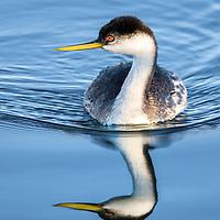 Wading Birds