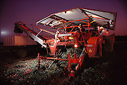 Tomatoes: Blackwelder tomato harvester at night, near Stockton, California, USA.