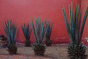 Still Life. Dia del los Muertos, San Miguel de Allende, Mexico.