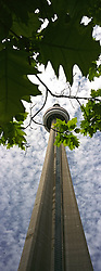 Toronto, ON, Canada    03/Junho/2005.A CN Tower (Canada's National Tower) e folhas de maple tree, arvore simbolo do Canada./ The CN Tower is the tallest free-standing structure on land in the world, at 553.33 metres (1,815 ft., 5 inches). It is located in the city of Toronto, Ontario, Canada. The flag of Canada depicts a stylized maple leaf and is a prominent national symbol./Canadian National Tower, ist der 553,33 Meter hohe Fernsehturm von Toronto (Kanada)..Foto Marcos Issa/Argosfoto