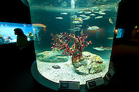 Aquarium displays at the Marine Park Nixe.