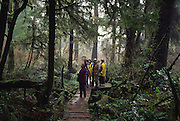 Rainforest, Pacifc Rim National Park, British Columbia, Canada<br />