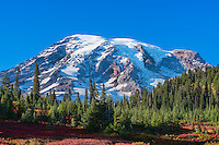 Snow capped Mt. Rainier with a blue sky