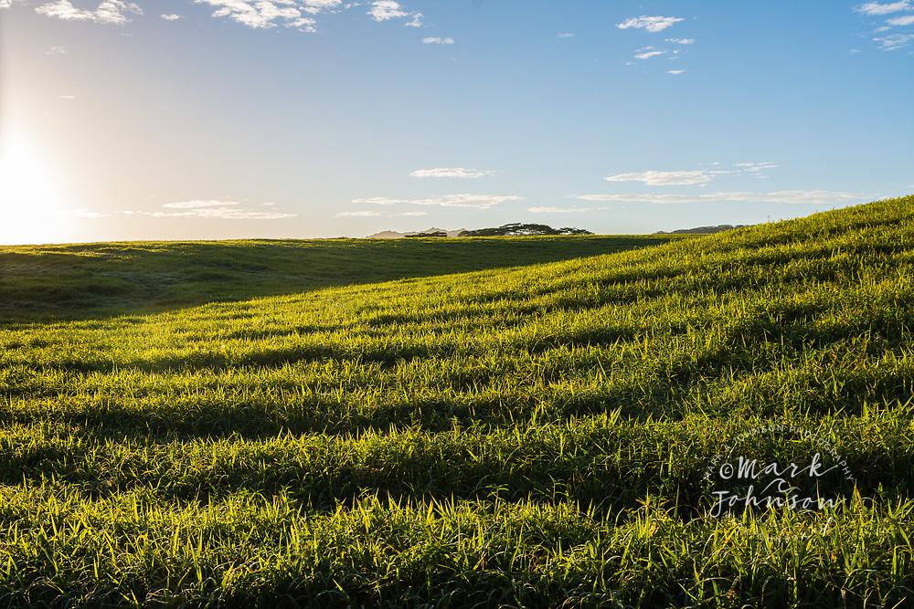 Green grass field near Kilauea, Kauai, Hawaii