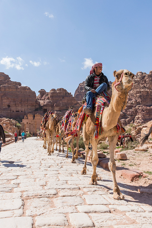 Jordan, Petra, Tour guide leads camels for tourist rides through Petra amid ancient ruins