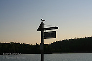 Seagull perches on launch fees sign at sunrise in Lake Superior's northernmost harbor at Nipigon, Ontario; Canada.