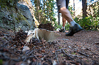 A hiker walks by a variety of wild fungi along the trail by Lightning Lake, in Manning Park, BC