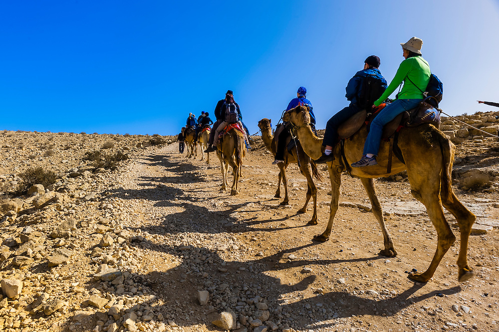 Camel safari in the Negev Desert at Chan Hashayarot, Israel.