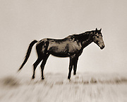 Namibian Feral Horses.<br />