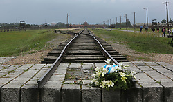 Commemorative flowers on the rail track in Auschwitz II-Birkenau Nazi concentration camp, in Auschwitz, Poland on September 3, 2017. Auschwitz concentration camp was a network of German Nazi concentration camps and extermination camps built and operated by the Third Reich in Polish areas annexed by Nazi Germany during WWII. It consisted of Auschwitz I (the original camp), Auschwitz II–Birkenau (a combination concentration/extermination camp), Auschwitz II–Monowitz (a labor camp to staff an IG Farben factory), and 45 satellite camps. In September 1941, Auschwitz II–Birkenau went on to become a major site of the Nazi Final Solution to the Jewish Question. From early 1942 until late 1944, transport trains delivered Jews to the camp's gas chambers from all over German-occupied Europe, where they were killed en masse with the pesticide Zyklon B. An estimated 1.3 million people were sent to the camp, of whom at least 1.1 million died. Around 90 percent of those killed were Jewish; approximately 1 in 6 Jews killed in the Holocaust died at the camp. Others deported to Auschwitz included 150,000 Poles, 23,000 Romani and Sinti, 15,000 Soviet prisoners of war, 400 Jehovah's Witnesses, and tens of thousands of others of diverse nationalities, including an unknown number of homosexuals. Many of those not killed in the gas chambers died of starvation, forced labor, infectious diseases, individual executions, and medical experiments. In 1947, Poland founded a museum on the site of Auschwitz I and II, and in 1979, it was named a UNESCO World Heritage Site. Photo by Somer/ABACAPRESS.COM